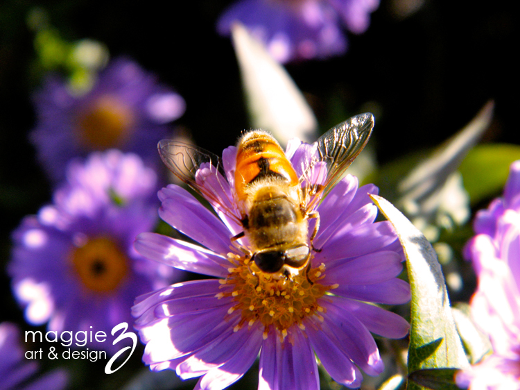 an image of a bee on a purple flower photographed by Maggie Ziegler