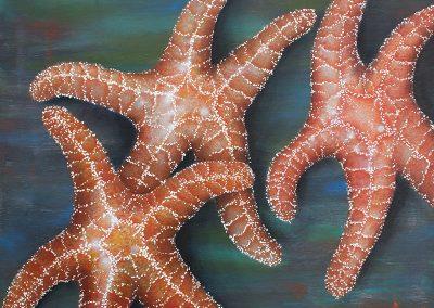 Tribune Bay Stars IX